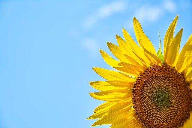 Lecytyna słonecznikowa ekologiczna